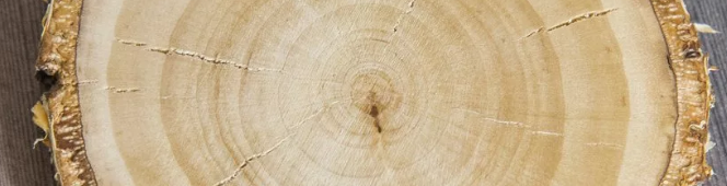 Birchwood for carving