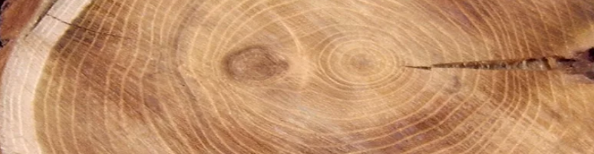 ash wood for carving
