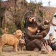 bears with other animals